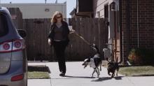 Neighborhood Newsletter - Dog Walking